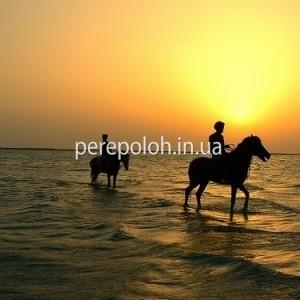 Фотосессия на лошадях, заказать в Одессе
