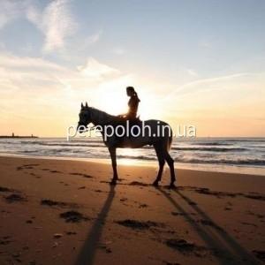 Заказать фотосессию на лошади