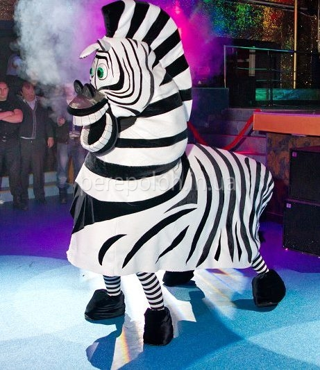 Танцующая зебра Одесса
